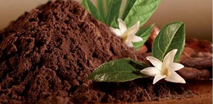 فواید مصرف پودر کاکائو