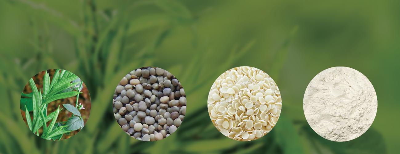 گوارگام guar gum چیست و چه کاربردی دارد؟