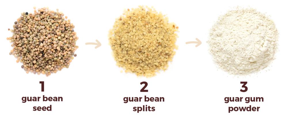وارد کنندگان و فروشندگان گوارگام Guar Gum