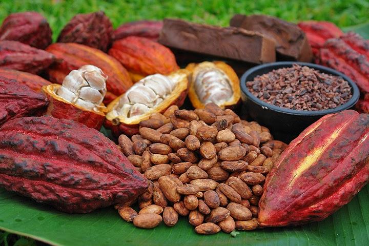پودر کاکائو روشن طبیعی